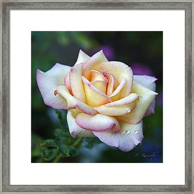 Framed Print featuring the photograph Morning Dew by Cheri Randolph