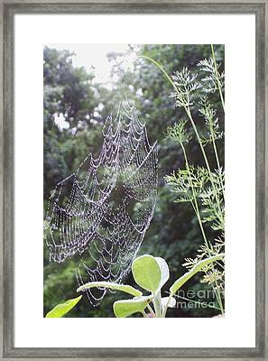 Morning Dew Framed Print by Michelle Welles