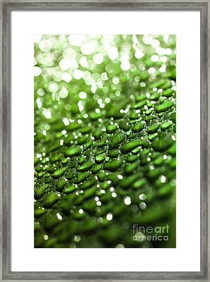Morning Dew On Plant Leaf Framed Print
