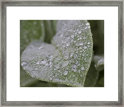 Morning Dew Framed Print by Tammye Nash