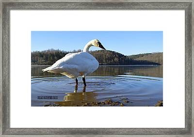 Framed Print featuring the photograph Morning Dip by Brian Stevens