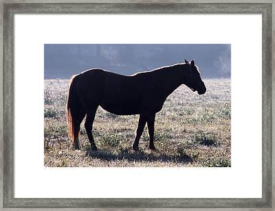 Morning Equine Framed Print by Mark J Seefeldt