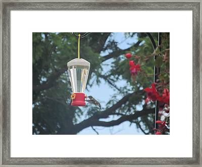 Framed Print featuring the photograph Morning Feed by Tina M Wenger