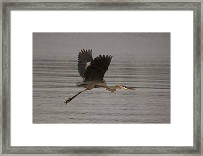 Framed Print featuring the photograph Morning Flight by Eunice Gibb