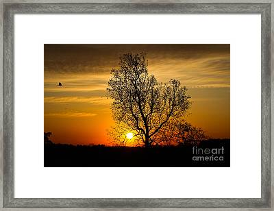 Morning Flight Framed Print by Everett Houser