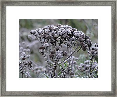 Framed Print featuring the photograph Morning Frost by Tiffany Erdman