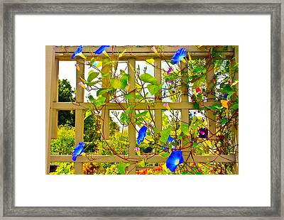 Morning Glory  Framed Print by Ann Murphy