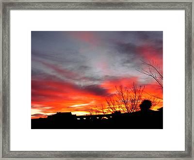 Morning Glory Framed Print by Joyce Woodhouse