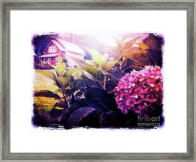 Morning Glory Framed Print by Kevyn Bashore