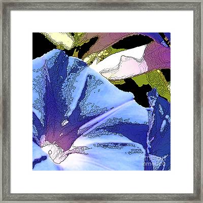 Morning Glory Framed Print by Artist and Photographer Laura Wrede