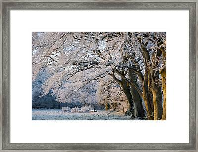 Morning Glory Framed Print by Rob Hemphill