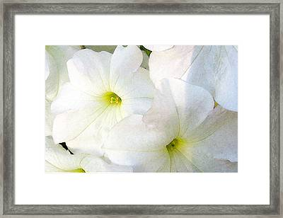 Framed Print featuring the photograph Morning Glow by Jan Cipolla