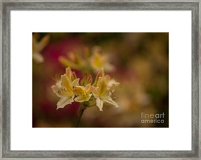 Morning Glow Framed Print by Mike Reid