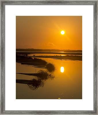 Morning Gold Framed Print by Alan Raasch