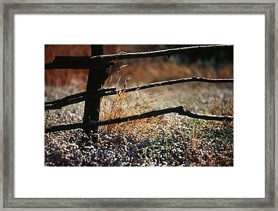 Morning Grass Framed Print by Carlos Diaz