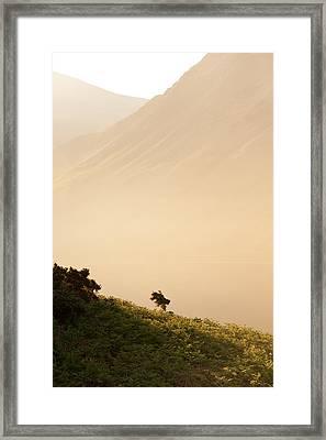 Morning Haze Framed Print by Svetlana Sewell