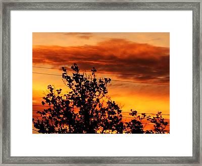 Morning In Silhouette Framed Print by Denise Workheiser