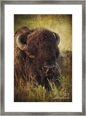 Morning In The Prairie Framed Print