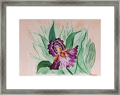 Morning Iris Framed Print