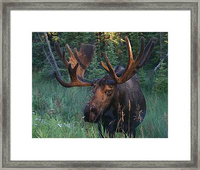 Morning Light Framed Print by Doug Lloyd