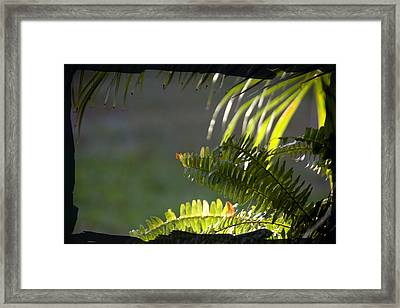 Framed Print featuring the photograph Morning Light by Lou Belcher
