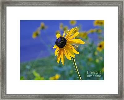 Framed Print featuring the photograph Morning Light by Nava Thompson