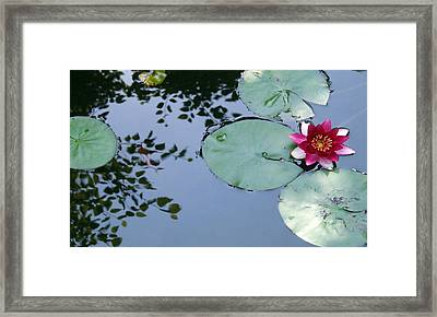 Framed Print featuring the photograph Morning Lilly by Dan Menta