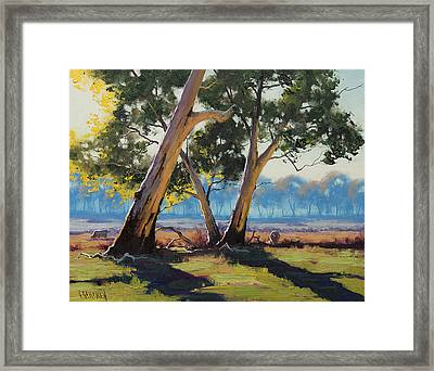Morning Lit Gums Framed Print