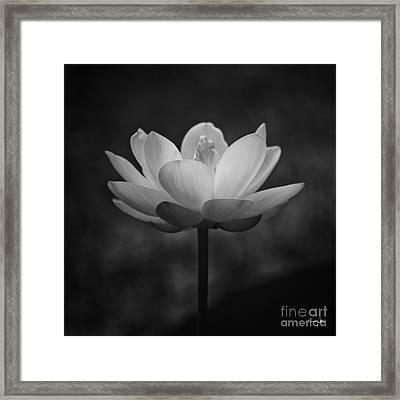 Morning Lotus Framed Print by Scott Pellegrin