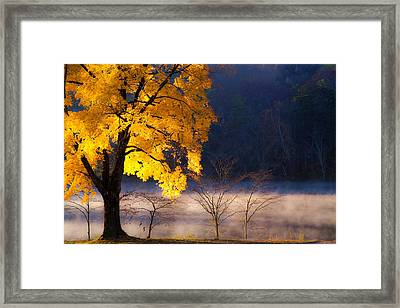 Morning Maple Ll Framed Print by Rob Travis