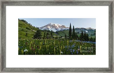 Morning Meadow Framed Print by Mike Reid