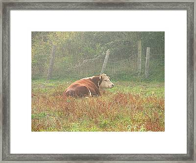 Morning Moo Framed Print