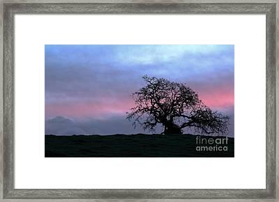 Morning Oak Framed Print by Daniel Ryan