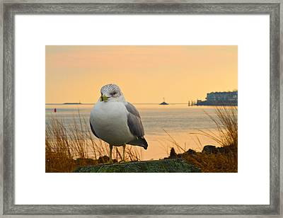 Morning On The Canal Framed Print