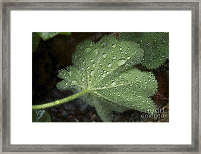 Morning Rain Framed Print