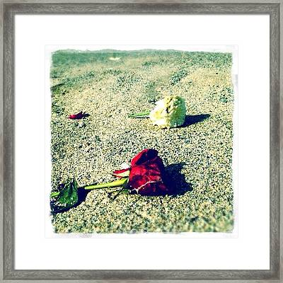 Morning Roses Framed Print