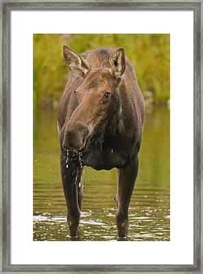 Morning Shower Framed Print