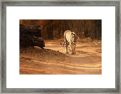 Framed Print featuring the photograph Morning Stroll by Fotosas Photography