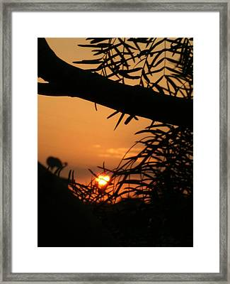 Framed Print featuring the photograph Morning Sun And Mesquite by Louis Nugent