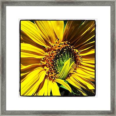 Morning Sun Framed Print by Gwyn Newcombe