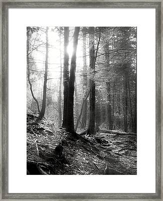 Framed Print featuring the photograph Morning Sun by Mary Almond