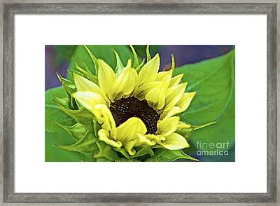 Morning Sunshine Framed Print by Gwyn Newcombe