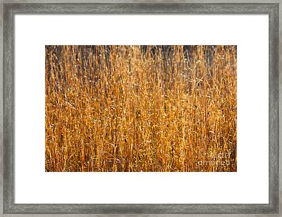 Morning Sunshine On The Marsh Framed Print by Carol Groenen