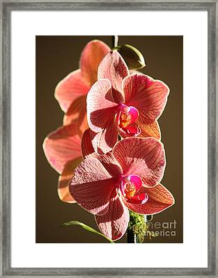 Morning Sunshine Orchids Framed Print