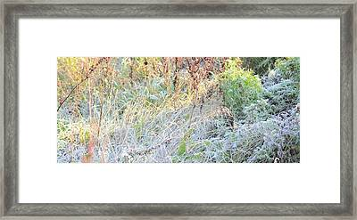 Morning Surprise Framed Print