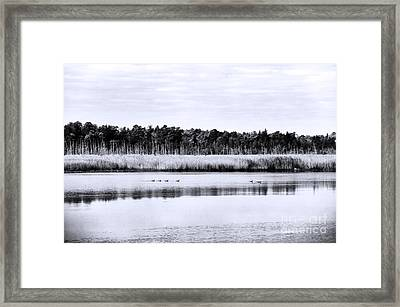 Morning Swim Framed Print by John Rizzuto