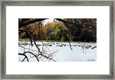 Morning Swim Framed Print by Lorraine Louwerse
