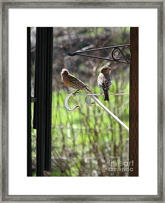 Morning Visitors Framed Print by Rory Sagner