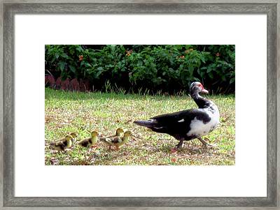 Morning Walk Framed Print by Juliana  Blessington