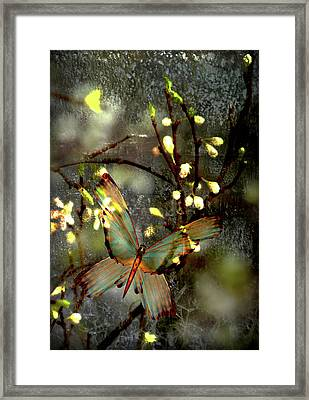 Morning's Moth On Apple Blossom Framed Print
